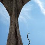 15-mattia-trotta-artista-sculture-filo-metallico-ferro-bronzo-alluminio-rame-moby-dick